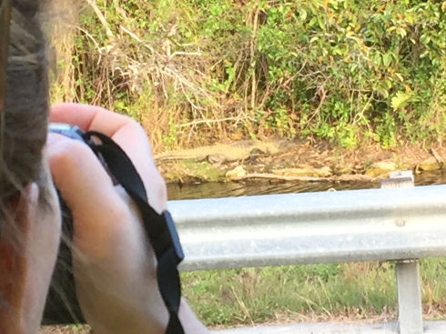 Ally photographing a gator